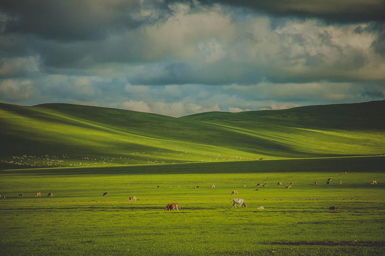 呼伦贝尔草原味道旅游文化